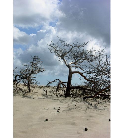 дерево (500x560, 58Kb)
