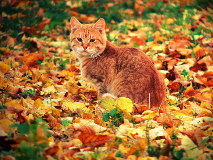Рыжая Кошка гуляет сама по себе...