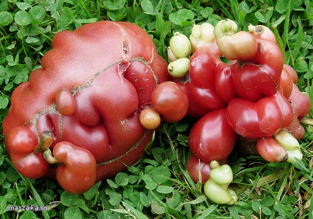 Странные овощи конкурса Wonky Veg