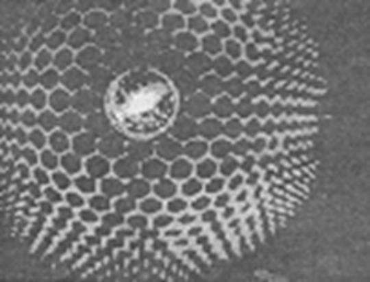 ячеистая всел (540x412, 24Kb)