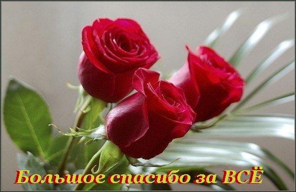 45165798__1608777 (600x390, 47Kb)