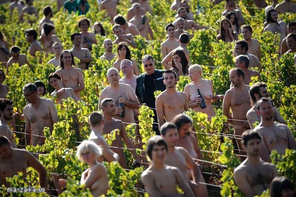 Ню модели в винограднике, Бургундия, 4 октября 2009