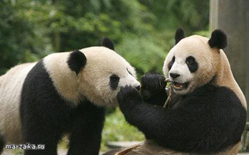 Пандам негде жить