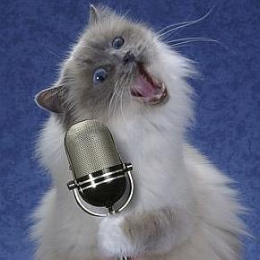 Кошачья песня...