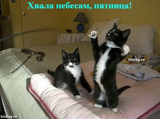 http://img0.liveinternet.ru/images/attach/c/1//49/950/49950861_ppppp_ppppppp_ppppppp.jpg