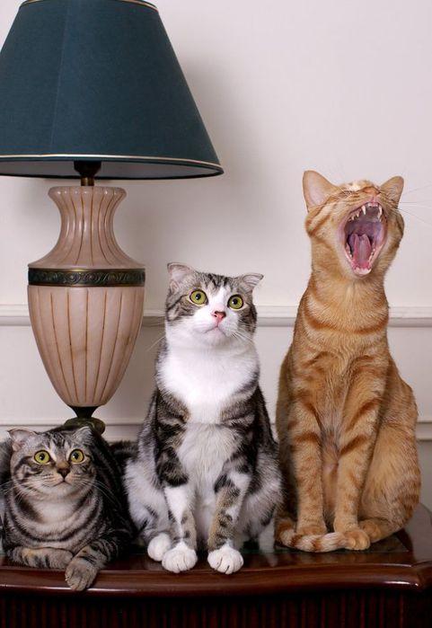 Кошачья афористика