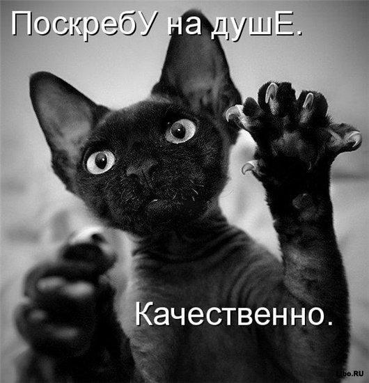 ☕ PĻĀPĀTAVA / БОЛТАЛКА ОБО ВСЕМ! - Page 3 50110064_poskrebu
