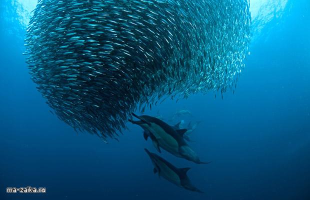 Конкуренция рыб