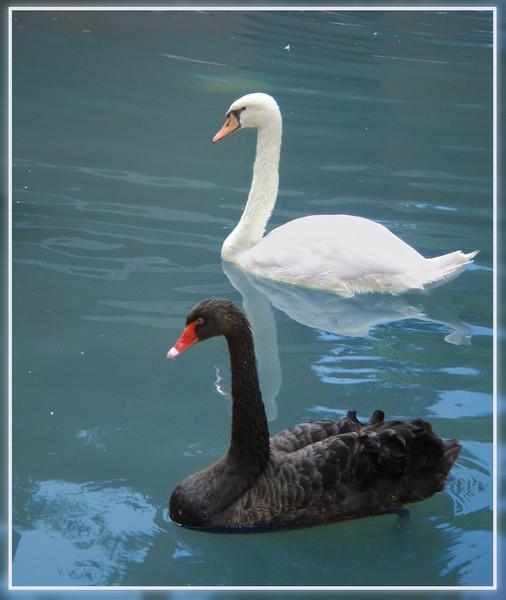 Песня Лебеди Лебеди Белые Лебеди В Небе Над Нами Опять Слушать
