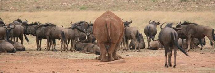 Южноафриканское сафари - Stephani Enn Wouter