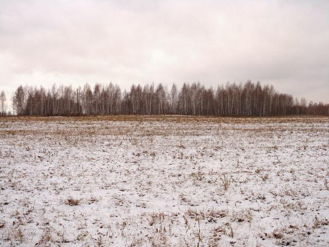 Поле в снегу