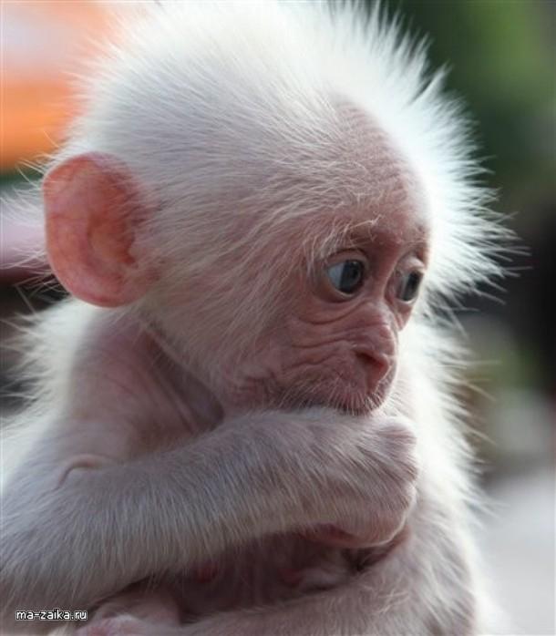 Обезьяна фото. Трогательные снимки животных.