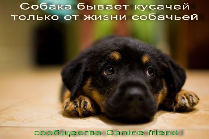 http://img0.liveinternet.ru/images/attach/c/1//50/514/50514881_soobschestvo.jpg