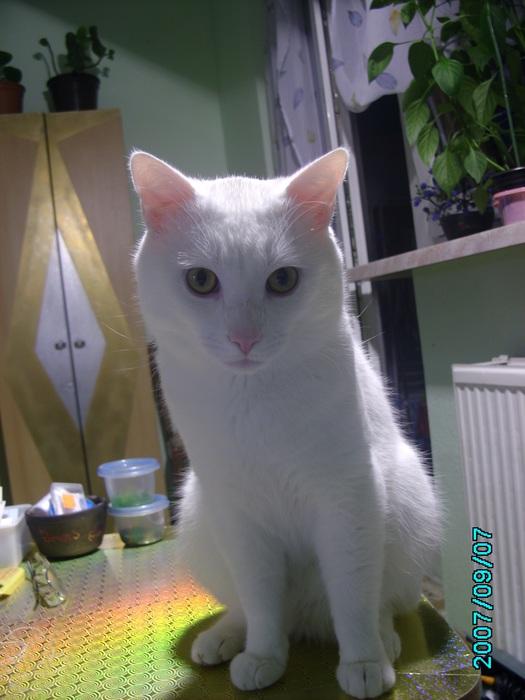 моя котомания и её обьект под именем Шнурок 58302