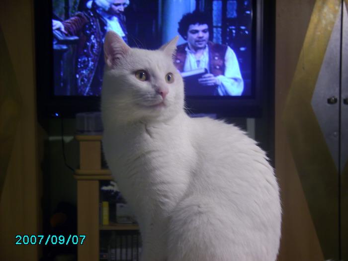 моя котомания и её обьект под именем Шнурок 18995