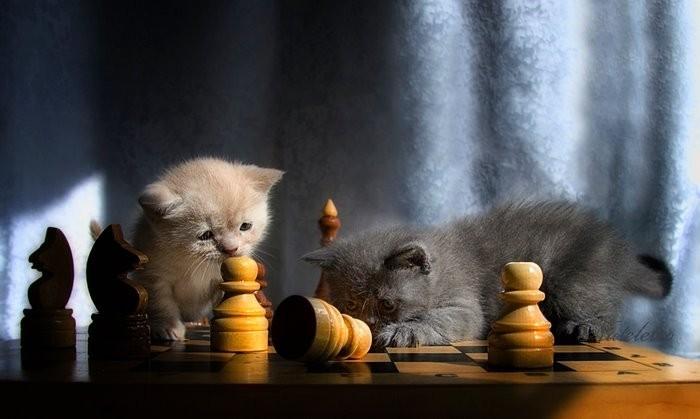 http://img0.liveinternet.ru/images/attach/c/1//53/974/53974117_508182_371471.jpg