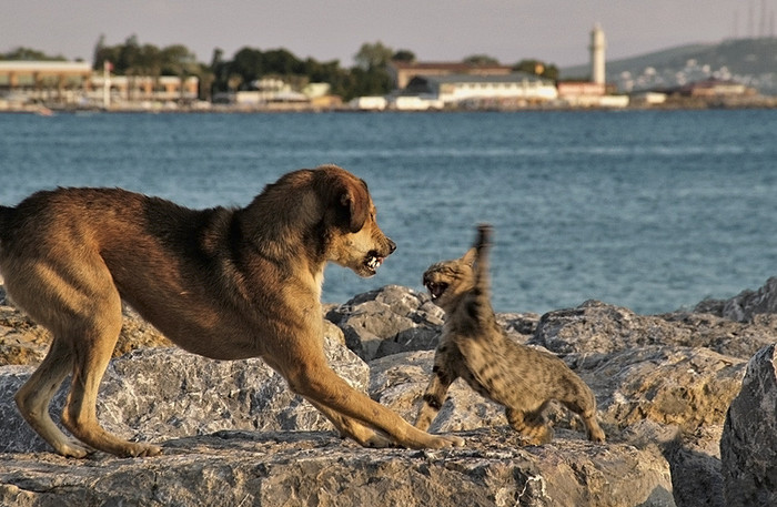 кот и пес