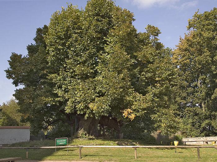 Schloss Augustusburg-ЗАМОК Аугустусбург 74159
