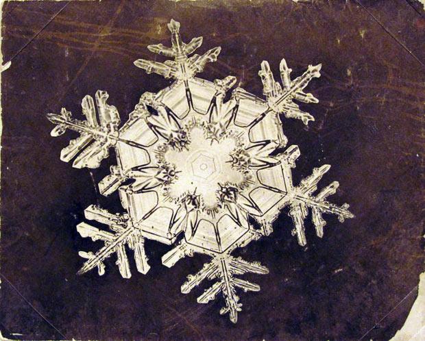 Первые нежинки под микроскопом: фотографии снежных кристаллов Wilson Bentley