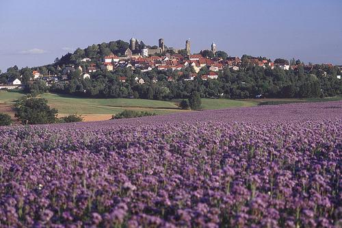 Burg Stolpen-вид внутри 50699
