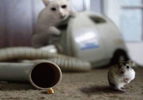 кот мышь и пылесос