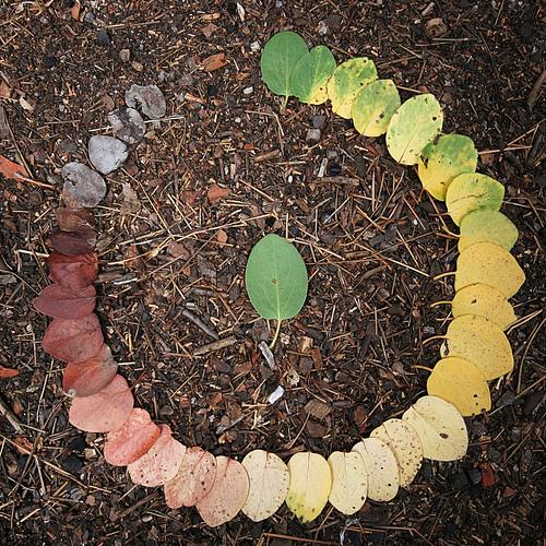 фото круг жизни
