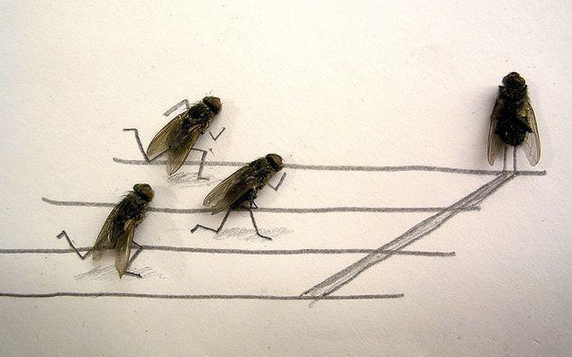 мухи бегуны