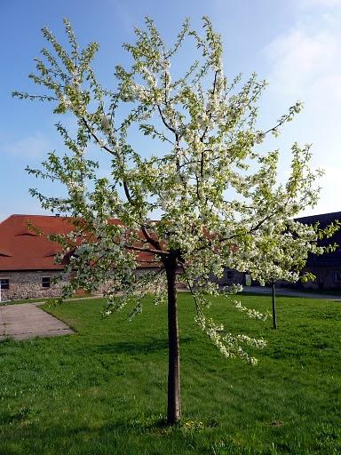 Монастырский парк Альтцелла (нем. Klosterpark Altzella) 18617