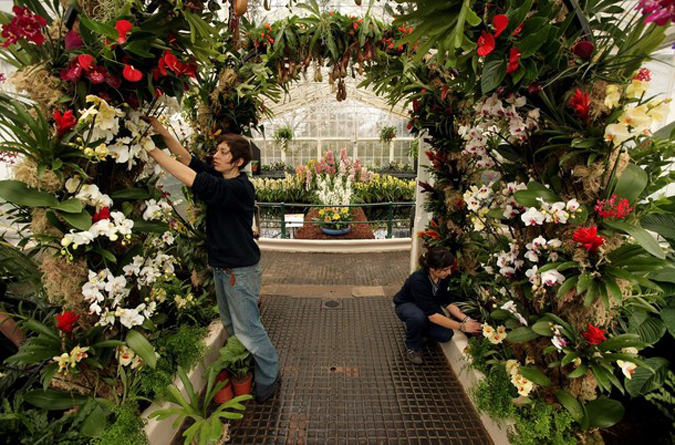 Kew Gardens в Королевском ботаническом саду 'Tropical Extravaganza', Лондон, Англия, 4 февраля 2010 года.