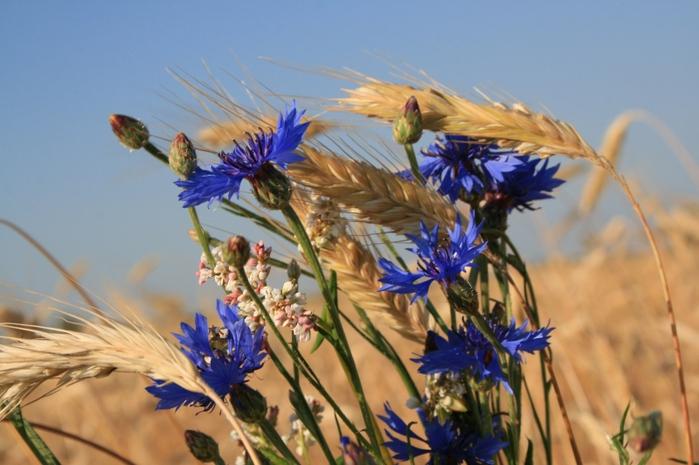 Картинки природы россии летом