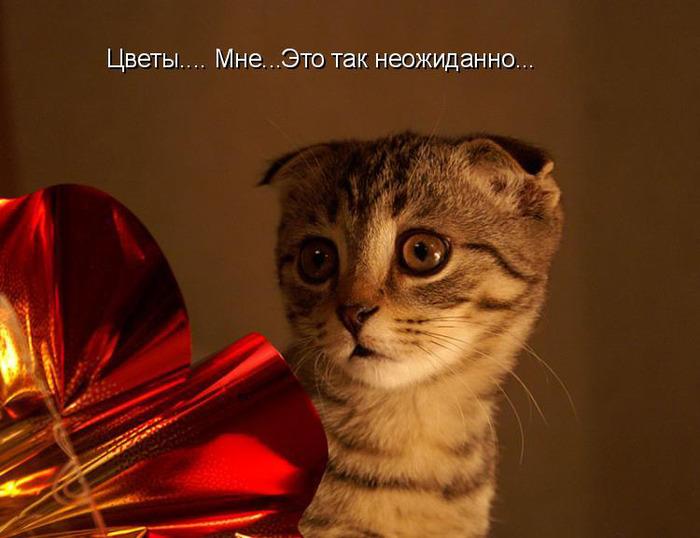 Посмотреть коты приколы