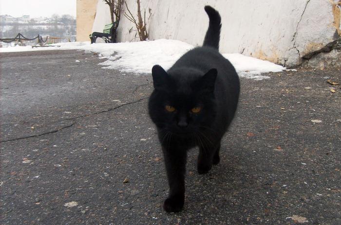кот идёт