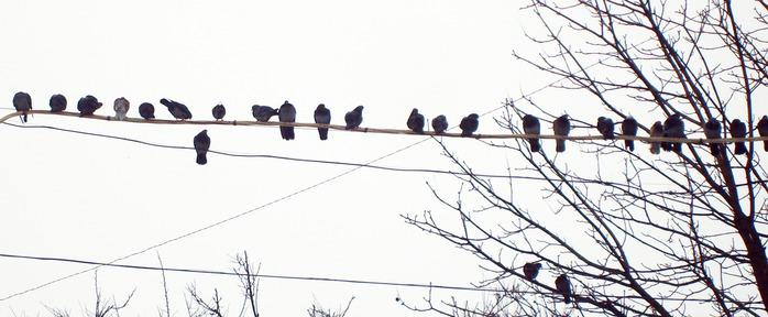 голуби на проводе, небо