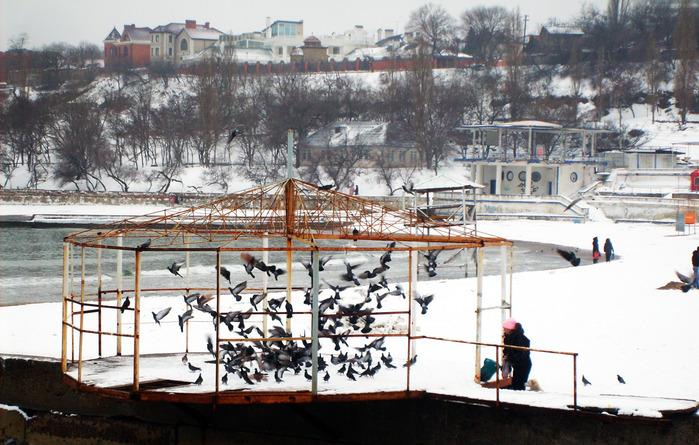 голубятня, голуби на море, аркадия зимой