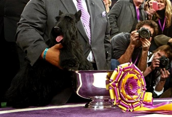 Крупнейшая в США выставка собак Westminster Kennel Club Dog Show прошла в Нью-Йорке 15-16 февраля 2010 года.