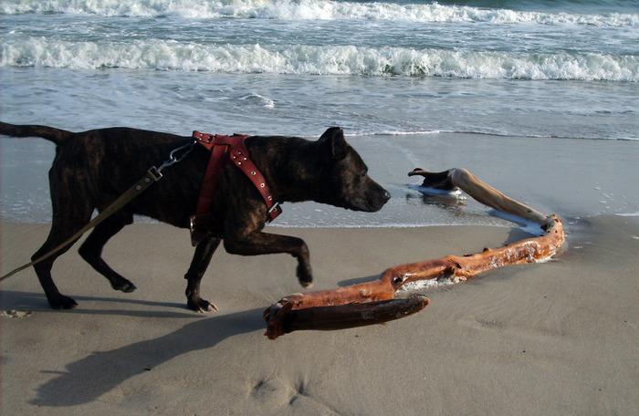 море и собака, собака на море, коряга