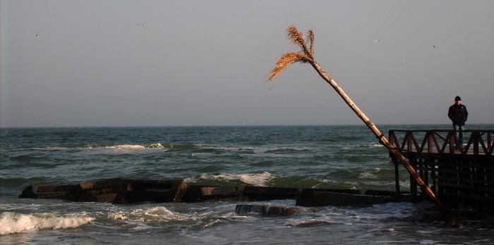 пальма, одесса, море