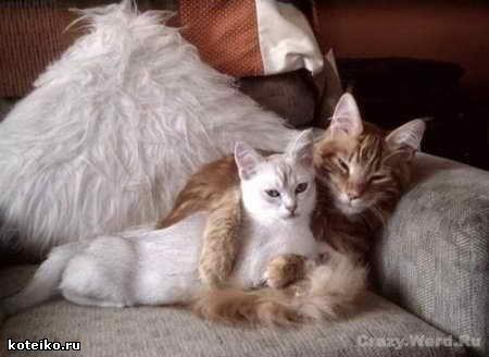 http://img0.liveinternet.ru/images/attach/c/1//55/524/55524384_1397bc579678t.jpg