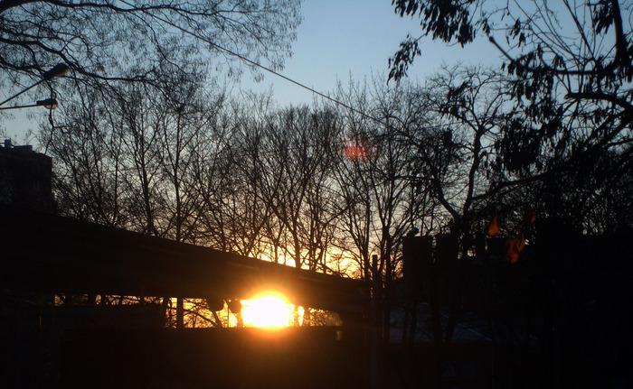 закат через деревья, вечер в одессе