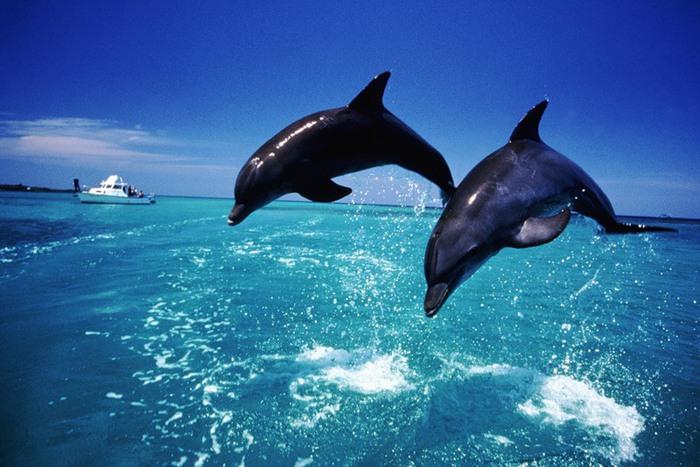В США дельфин запрыгнул на катер и поломал женщине ноги(ВИДЕО)