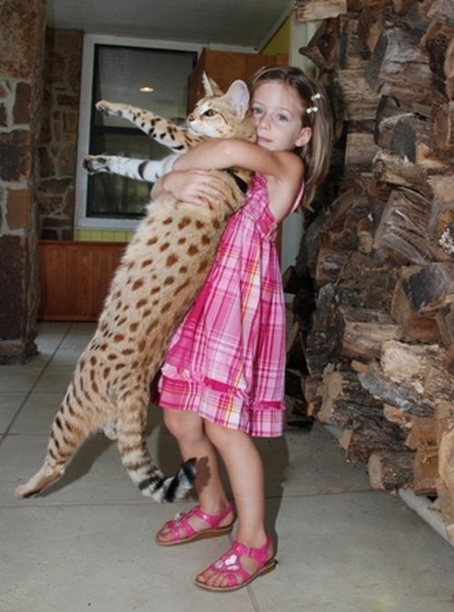 Cамый высокий кот в мире 20958