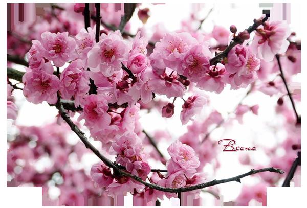 Весна 2 (600x407, 465 Kb)