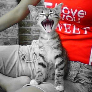 """Кошка. Фото с сайта конкурса """"Покажи характер"""" от PerfectFit"""