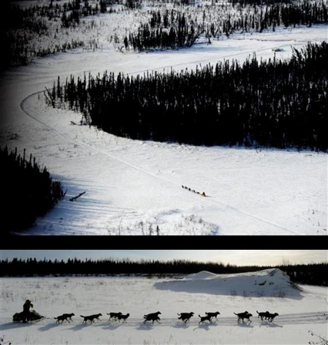 ����� �� ��������� 'The Iditarod Trail Sled Dog Race 2010' � ����������� ������