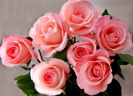 flowers004 (465x337, 40 Kb)