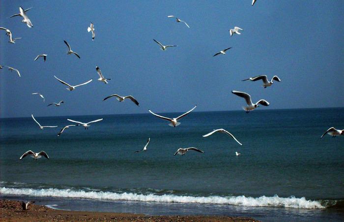 море одесса  чайки