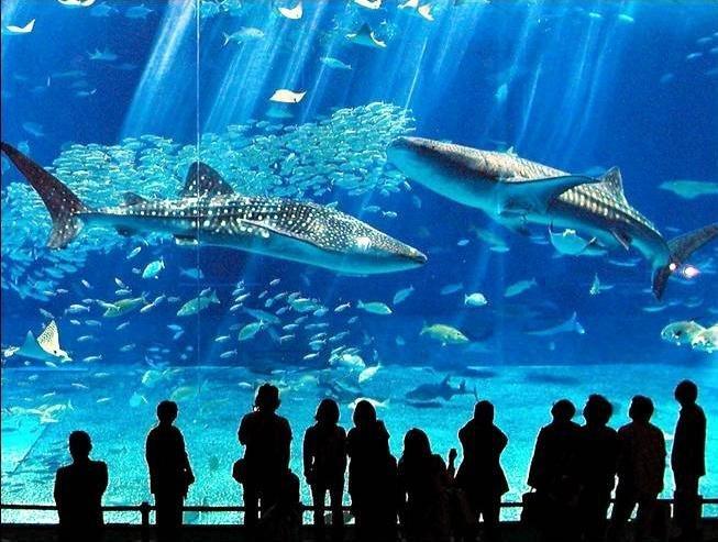 http://img0.liveinternet.ru/images/attach/c/1//56/477/56477104_1268634028_04_aquarium_75861.jpg