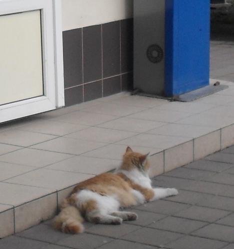 (468x496, 381Kb)Кошка, которую ни разу в жизни никто не пнул