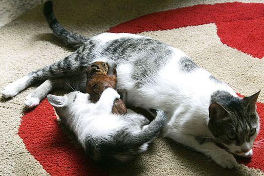кошка с котенком и белкой 1