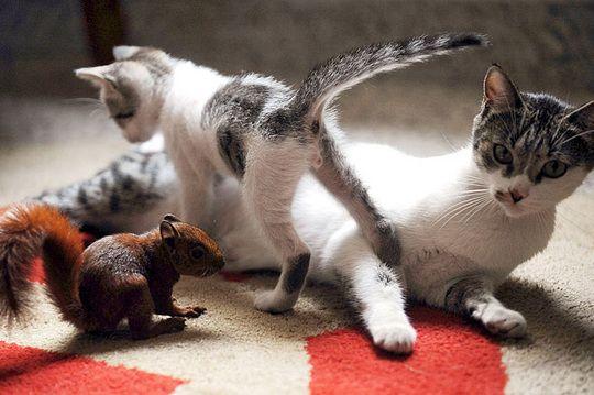 кошка с котенком и белкой 10